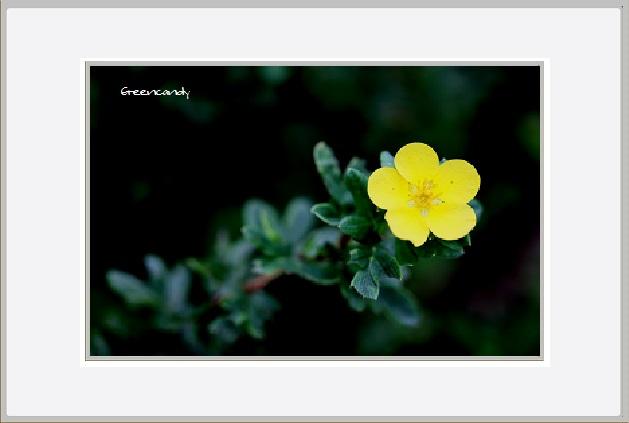 六甲高山植物園 - 8.jpg