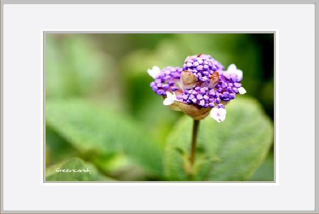 六甲高山植物園 - 9.jpg