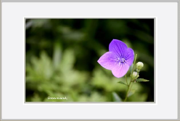 六甲高山植物園 - 11.jpg