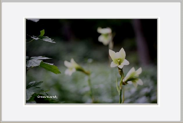 六甲高山植物園 - 12.jpg