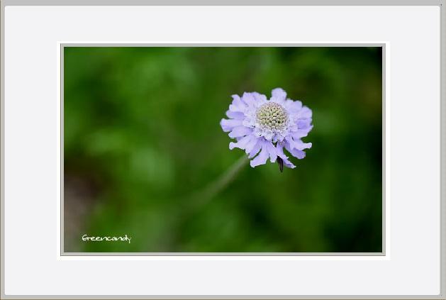 六甲高山植物園 - 13.jpg