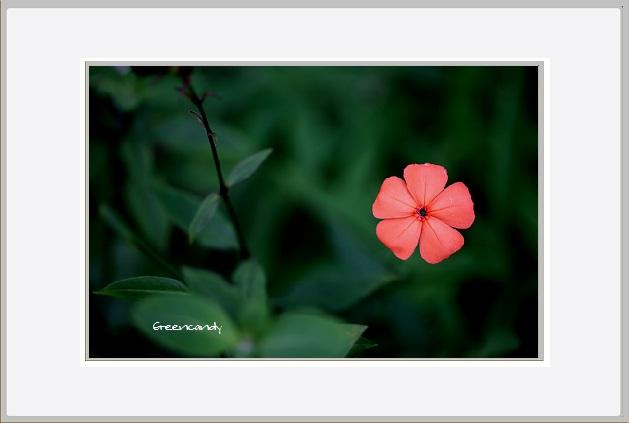 六甲高山植物園 - 15.jpg