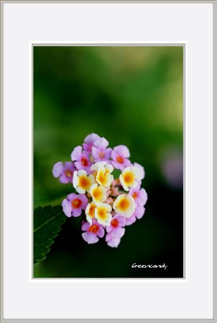 名を知らぬ花ー2.jpg