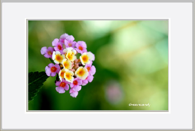 名を知らぬ花ー1.jpg