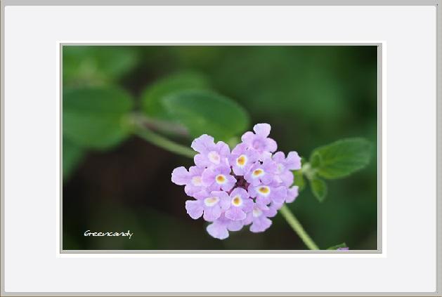 名を知らぬ花ー3.jpg