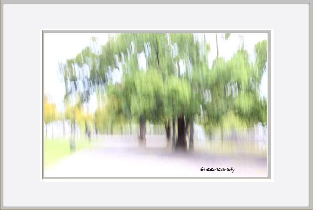 万博公園初秋の風景ー3.jpg