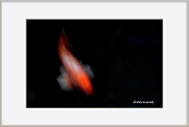 鯉ー4.jpg