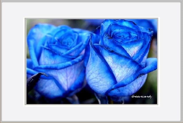 青い花ー4.jpg