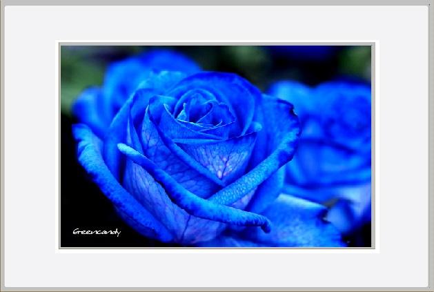 青い花ー1.jpg