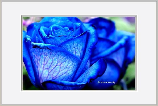 青い花ー2.jpg