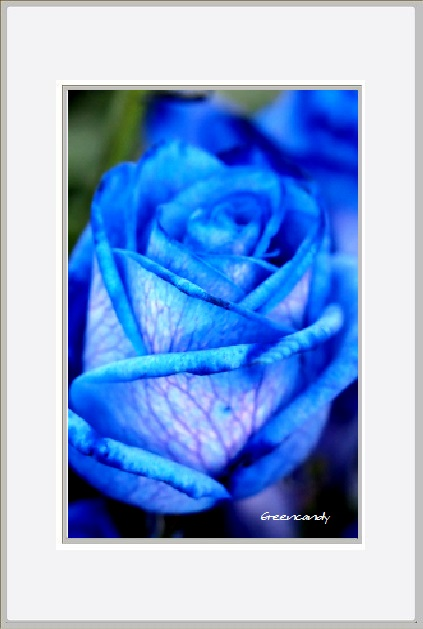 青い花ー3.jpg