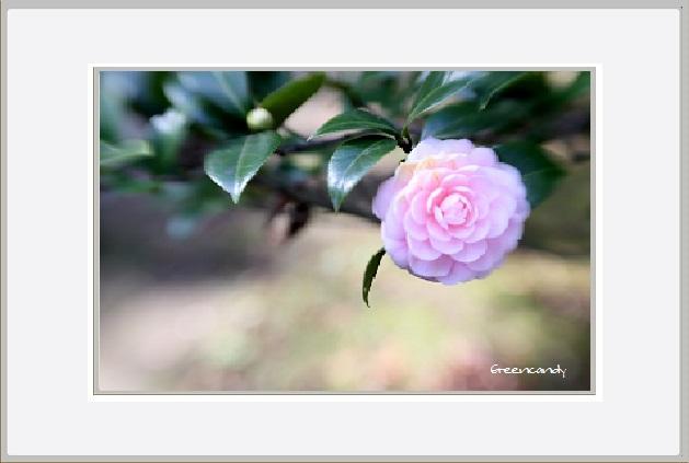 花ー1.jpg