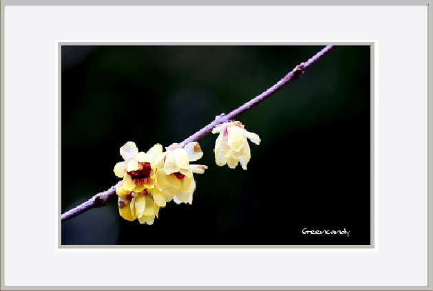 花ー2.jpg