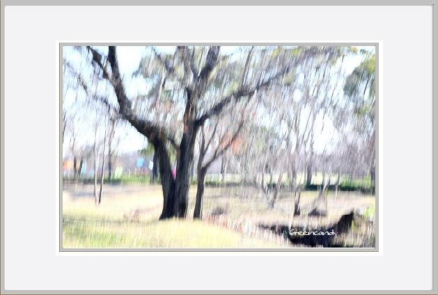 枯れ木ー3.jpg