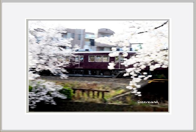 桜ー1.jpg