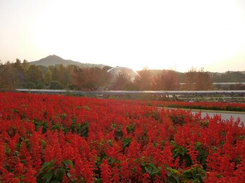 花の丘(サルビア編)
