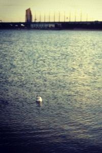 20120209_seabird