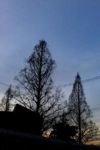 20120209_tree02