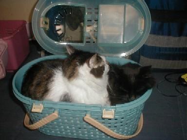 寒い日のベッド代わりのキャリーバッグ