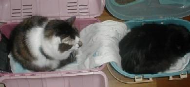 2匹別々におやすみ〜!
