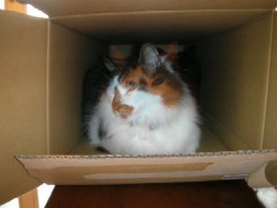 荷物を出したばかりの箱の中へ・・・