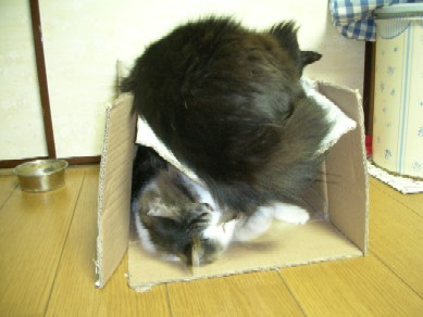 つぶれそうな箱で2匹が・・・