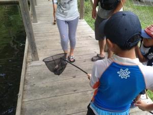 網で魚をゲット!