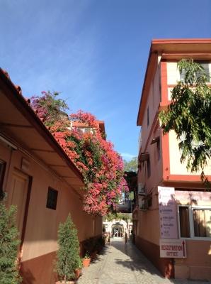 色とりどりの花が美しい、パルマート・ニケタンの中。