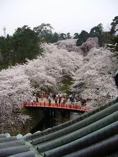 弘前 桜まつり