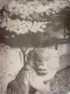 幕末古写真 狛犬