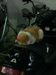 バイクの上で器用に寝ている猫
