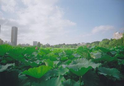 上野不忍池 byワイドレンズカメラ