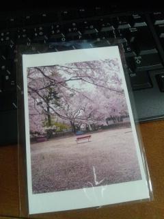 【桜届けるプロジェクト】桜の森 夜の森ポストカード