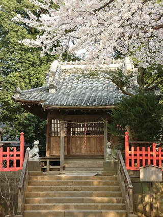 川越・鴉山稲荷神社の桜