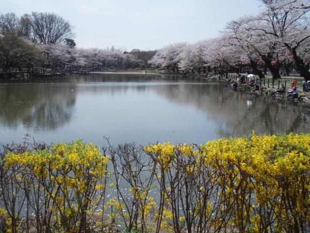 高徳神社と散りゆく桜