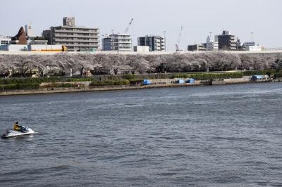 隅田川桜祭り