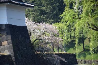千代田公園と皇居の桜