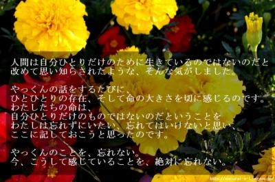 http://natural-s-l.jugem.jp/  11