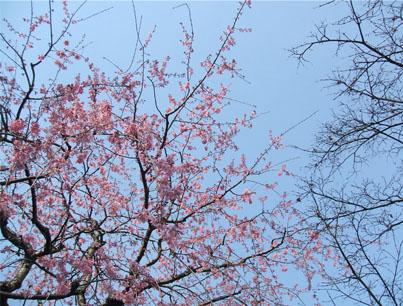 春うらら〜