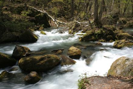 渓流に横たわる倒木