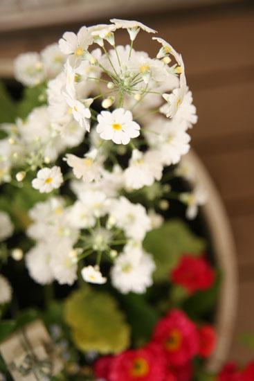 白い花いっぱい
