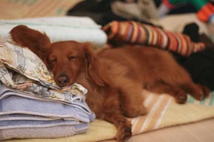 ふわふわ枕