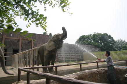 ゾウの水飲み その1