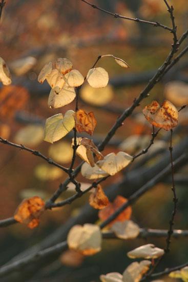 透ける秋色