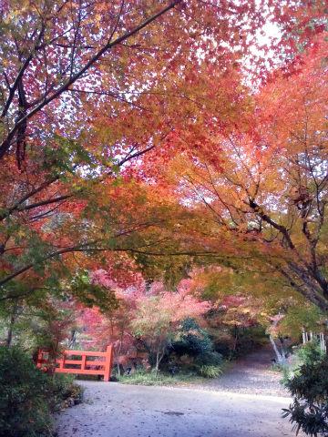 亀岡の紅葉2013
