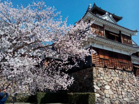 福知山城と桜