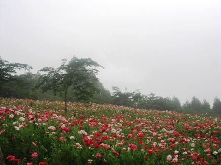 2011.6.10-4.JPG