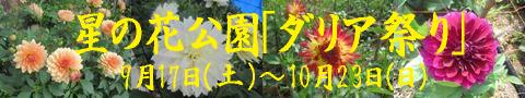 dariabana1.jpg