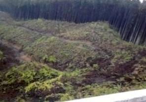 木佐美の伐採された山林