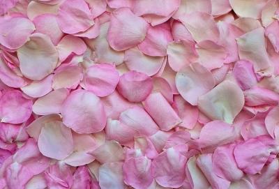 rose-petals-3194062__480[2].jpg